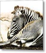 Grevy's Zebra Metal Print by Bill Tiepelman