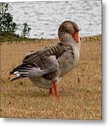 Greylag Goose 2 Metal Print