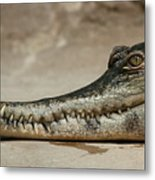 Grin And Bare It Metal Print