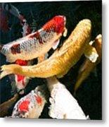 Group Of Koi Fish Metal Print