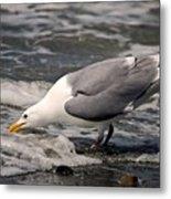 Gull At Surfs Edge Metal Print