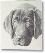 Gus - Chocolate Lab Pup Metal Print