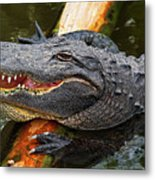 Happy Gator Metal Print