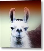 Happy Llama Metal Print by Myrna Migala