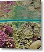 Hard Coral Carpets A Shallow Seafloor Metal Print