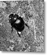 Harsh Life Black White Life Is Dung Beetle Card Metal Print