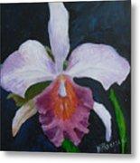 Hartford Orchid Metal Print