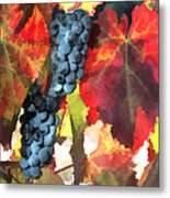 Harvest Time Grapes And Leaves Metal Print