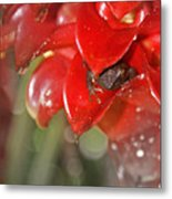 Hawaiian Frog Metal Print