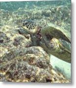 Hawaiian Green Turtle Metal Print