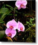 Hawaiian Orchids Metal Print
