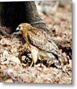 Hawk And Gecko Metal Print