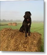Hay There Black Dog Metal Print