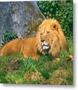 He Lion Metal Print
