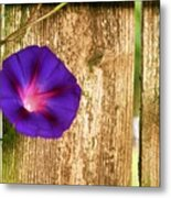 Heaven With Morning Glory Metal Print