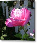 Heavenly Rose Metal Print