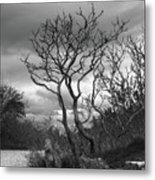 Hermit Island Tree 0192 Metal Print