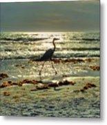 Heron Beachwalk Metal Print