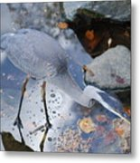 Heron Fishing Photograph Metal Print
