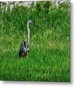 Heron In The Grasses Metal Print