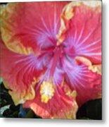 Hibiscus In Living Color Metal Print