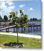 Hibiscus Rosasinensis With Fruit On The Indian River In Florida Metal Print