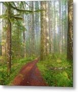 Hiking Trail In Washington State Park Metal Print