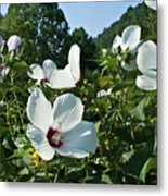 Hollyhock At Sunrise Metal Print