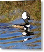 Hooded Mersanger Metal Print