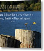 Hope For A Tree Metal Print by James Eddy