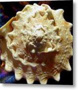 Horned Helmet Shell Top Logarithmic Spiral Metal Print