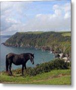 Horse Along Coastal Path Cornwall Metal Print