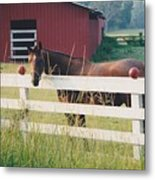 Horse And The Barn Metal Print