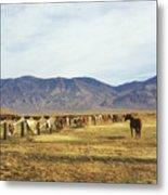 Horse In Eastern Sierras Metal Print