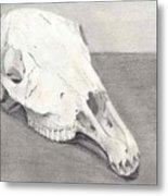 Horse Skull Metal Print