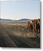Horses Cruising Metal Print