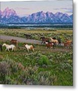 Horses Walk Metal Print