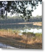 Horseshoe Lake Canopy Metal Print