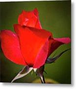 Hot Cocoa Rose Metal Print
