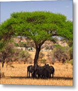 Huddled In Shade Metal Print