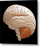 Human Brain Metal Print by Richard Newstead