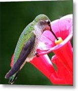 Hummingbird 33 Metal Print