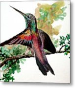 Hummingbird 5 Metal Print