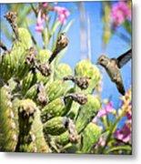 Hummingbird And The Saguaro  Metal Print
