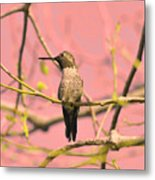 Hummingbird On A Branch Metal Print