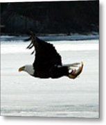 Hungry Eagle Metal Print