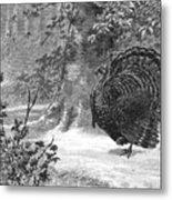 Hunting: Wild Turkey, 1886 Metal Print