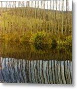 Huon Poplars Metal Print
