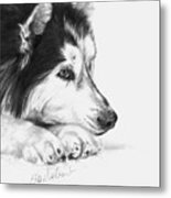 Husky Contemplation Metal Print by Sheona Hamilton-Grant