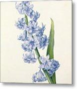 Hyacinth Metal Print by Pierre Joseph Redoute